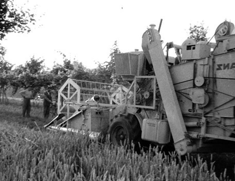 Una delle prime mietitrebbie impiegate nella pianura romagnola ( Foto © RC 1951)